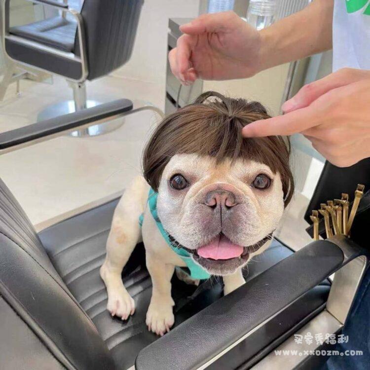 宠物可爱网红搞笑假发 带上太好笑啦